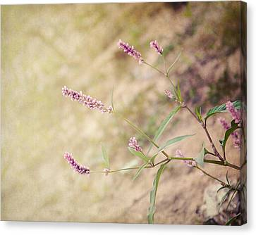 The Simple Things Canvas Print by Jai Johnson