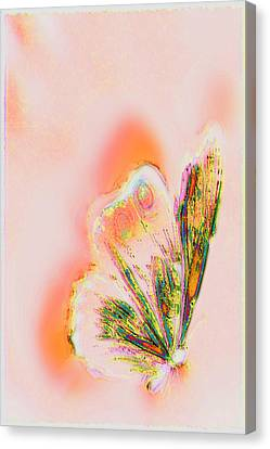 The Vibes Of A Butterfly's Mind Canvas Print by Li   van Saathoff