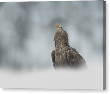 The Watcher Canvas Print by Andy Astbury