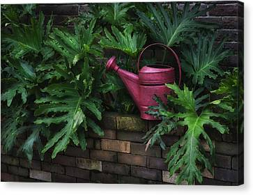 The Watering Can Canvas Print by Brenda Bryant