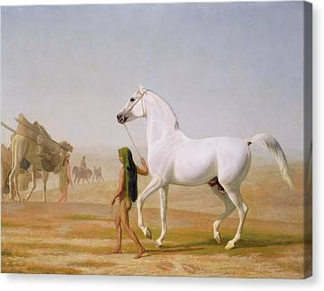 The Wellesley Grey Arabian Led Through The Desert Canvas Print by Jacques-Laurent Agasse