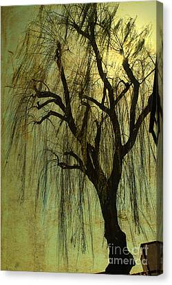The Willow Tree Canvas Print by Susanne Van Hulst