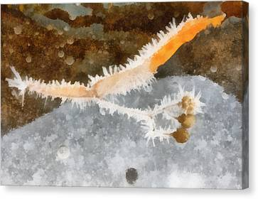 The Winter Still Life Canvas Print by Odon Czintos