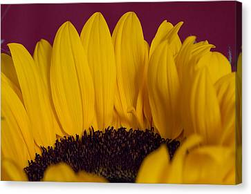 The Yellow Blossom Leaves Canvas Print by Andreas Levi