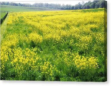 The Yellow Pasture Canvas Print by Bill Cannon