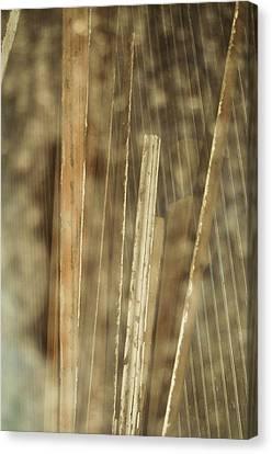 Thin Veil Canvas Print by Todd Sherlock