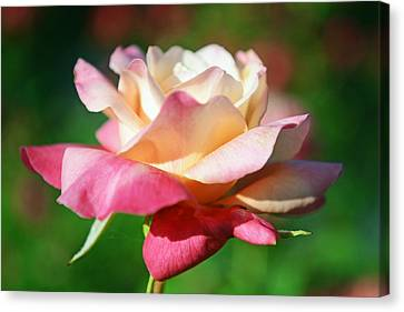 Thorns Have Roses Canvas Print by Melanie Moraga