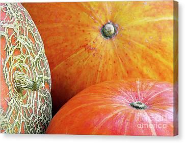 Three Pumpkins Canvas Print by Carlos Caetano