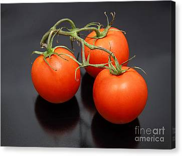 Three Red Tomatoes On The Vine Canvas Print by Ricky Schneider