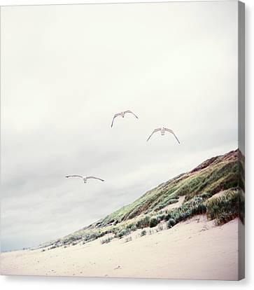 Three Seagulls At Beach Canvas Print by Elisabeth Schmitt