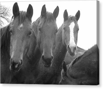 Three Stooges Canvas Print by Jessica Jandayan