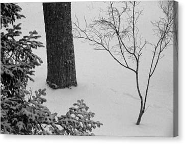 Three Trees In Snow Canvas Print by Simone Hester