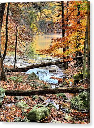 Through The Trees Canvas Print by JC Findley