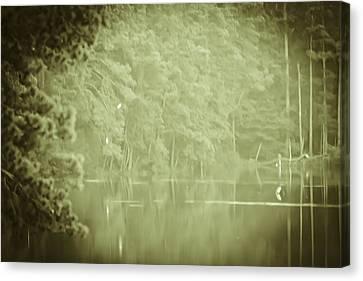 Through The Trees Canvas Print by Kim Henderson