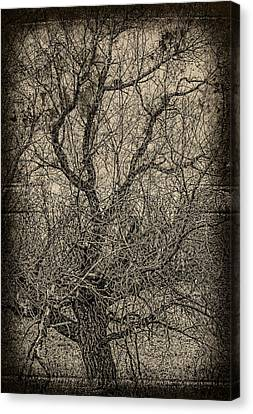 Tickle Of Branches  Canvas Print by JC Photography and Art