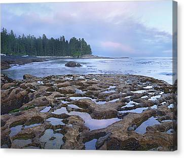 Tide Pools Exposed At Low Tide Canvas Print by Tim Fitzharris