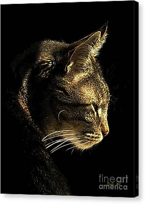 Tiger Within Canvas Print by Dale   Ford