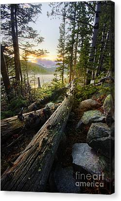Timber Canvas Print by Tyler Porter