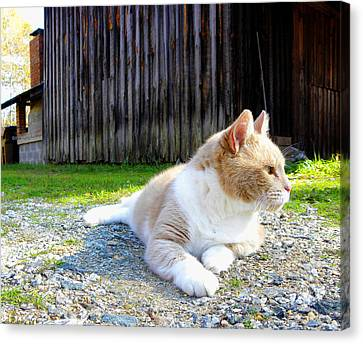 Toby Old Mill Cat Canvas Print by Sandi OReilly