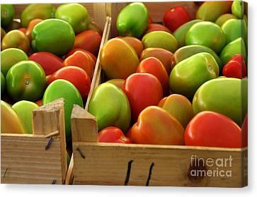 Tomatoes Canvas Print by Carlos Caetano