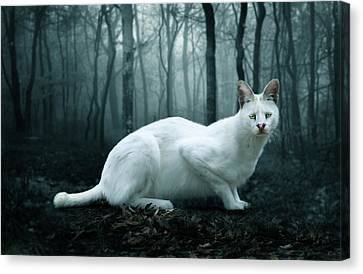 Tonga Canvas Print by Big Cat Rescue