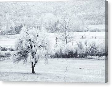 Tracks In The Frost Canvas Print by Mike  Dawson