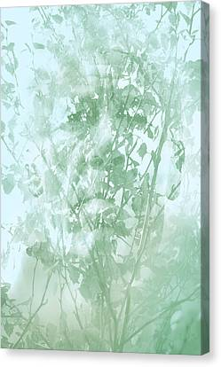 Transient Canvas Print by Richard Piper