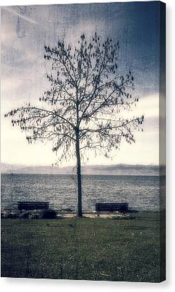 tree at lake Constance Canvas Print by Joana Kruse