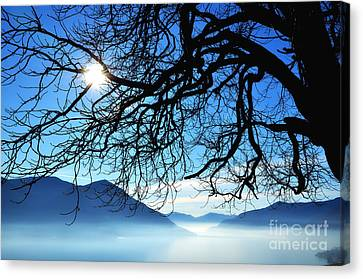 Tree Branches And Sun Canvas Print by Mats Silvan