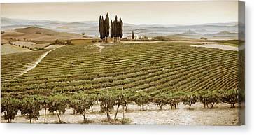 Tree Circle - Tuscany  Canvas Print by Trevor Neal