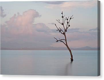 Tree In Water Canvas Print by Flash Parker