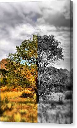 Tree Of Good And Evil Canvas Print by Emily Stauring