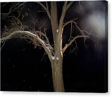Tree On A Dark Snowy Night Canvas Print by Victoria Sheldon