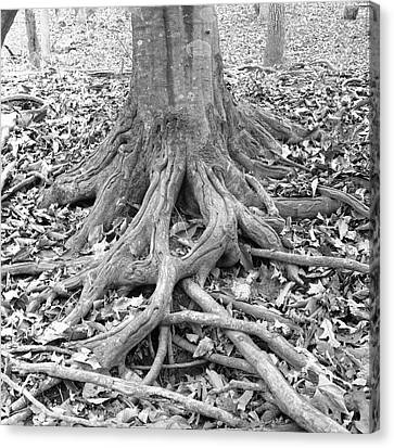 Tree Roots And Leaves Canvas Print by Holden Richards