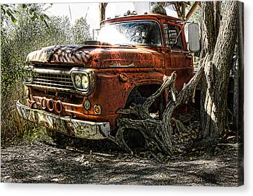 Tree Truck Canvas Print by Peter Chilelli
