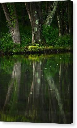 Tree Trunks Canvas Print by Karol Livote
