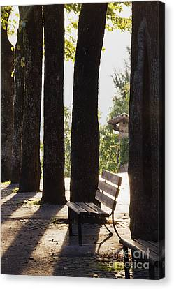 Trees And Bench Canvas Print by Jeremy Woodhouse
