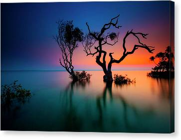 Trees In Bay At Sunset Canvas Print by Visionandimagination.com