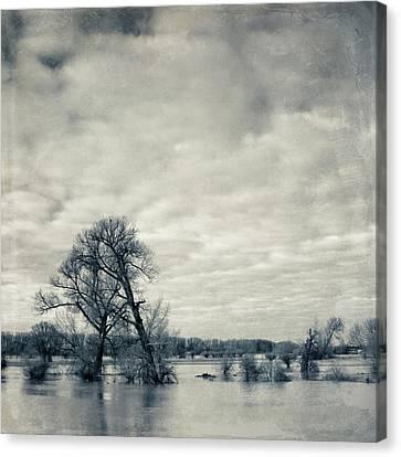 Trees In River Rhine Canvas Print by Dirk Wüstenhagen Imagery