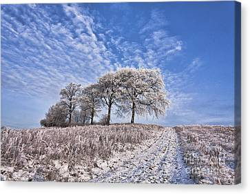 Trees In The Snow Canvas Print by John Farnan