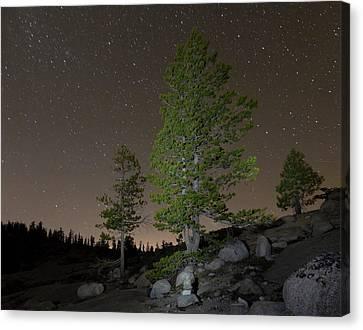 Trees Under Stars Canvas Print by Sean Duan