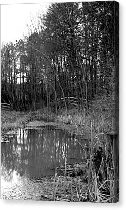 Trees With Pond Canvas Print by Terry Thomas