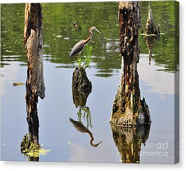 Tricolored Reflection Canvas Print by Al Powell Photography USA