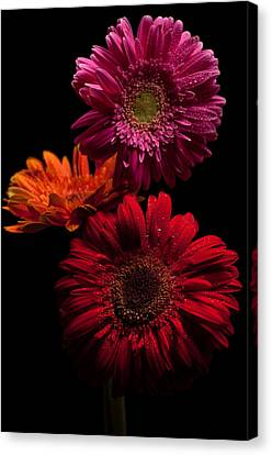 Trio Canvas Print by Ron Smith