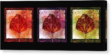 Triptych Leaves  Canvas Print by Ann Powell