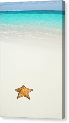Tropical Beach And Starfish Canvas Print by Mehmed Zelkovic