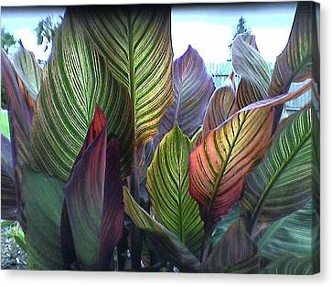 Tropical Canna Leaves Canvas Print by D J Larsen