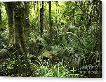 Tropical Jungle Canvas Print by Les Cunliffe