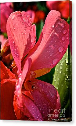 Tropical Rose Canna Lily Canvas Print by Susan Herber