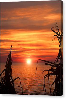 Tropical Sunset V6  Canvas Print by Douglas Barnard